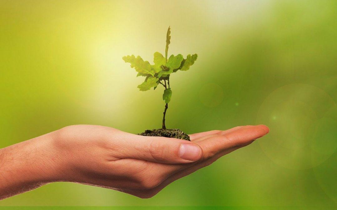 Les associations étudiantes se mobilisent pour l'environnement