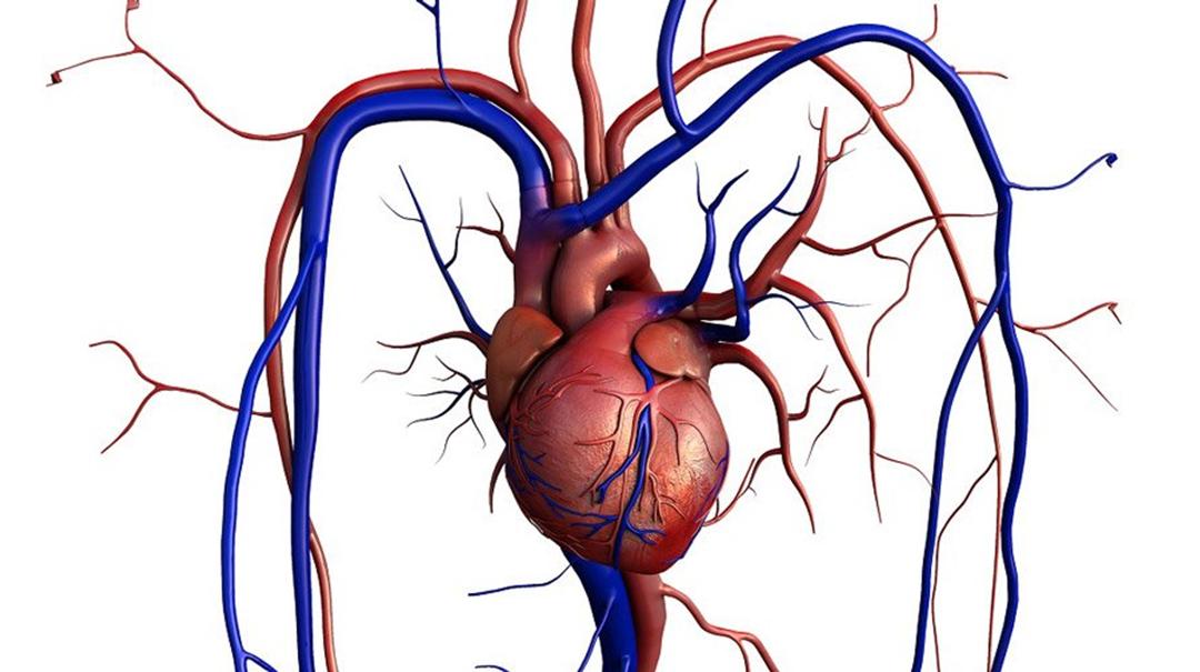 REALITY, un essai randomisé international – Comparaison de stratégies transfusionnelles chez les patients présentant un infarctus du myocarde et anémiques
