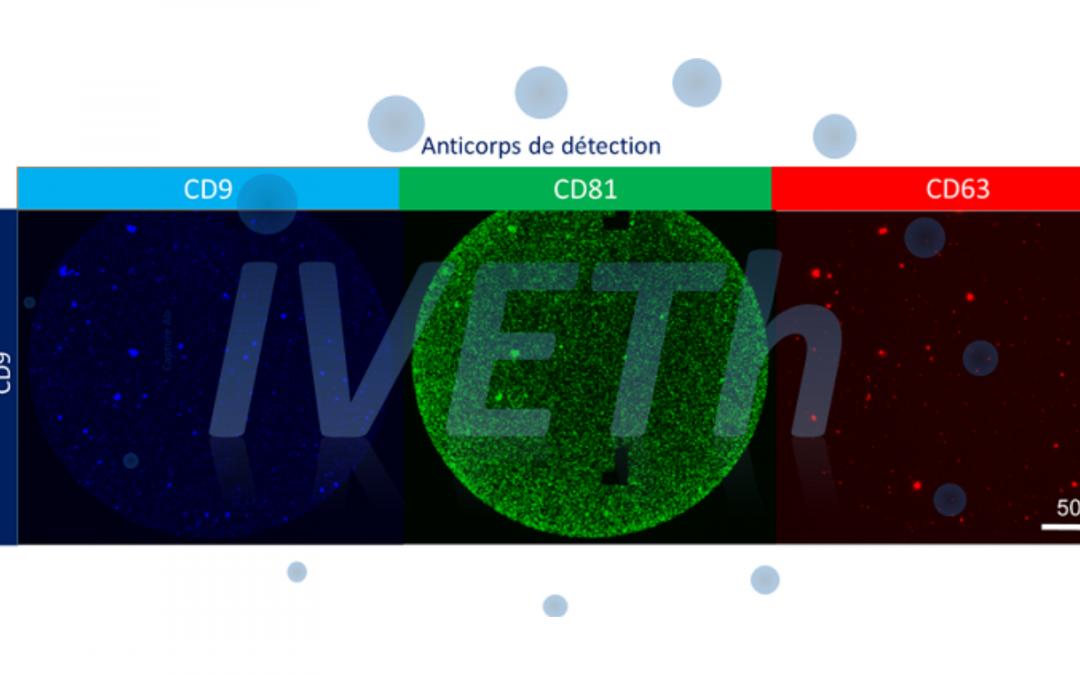 SESAME filières PIA : la plateforme IVETh lauréate