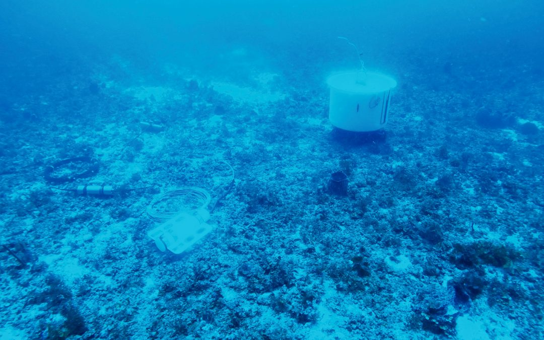 Installation réussie d'un premier observatoire sous-marin connecté en Guadeloupe